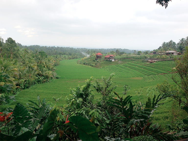 Kafe kalong - view sawah